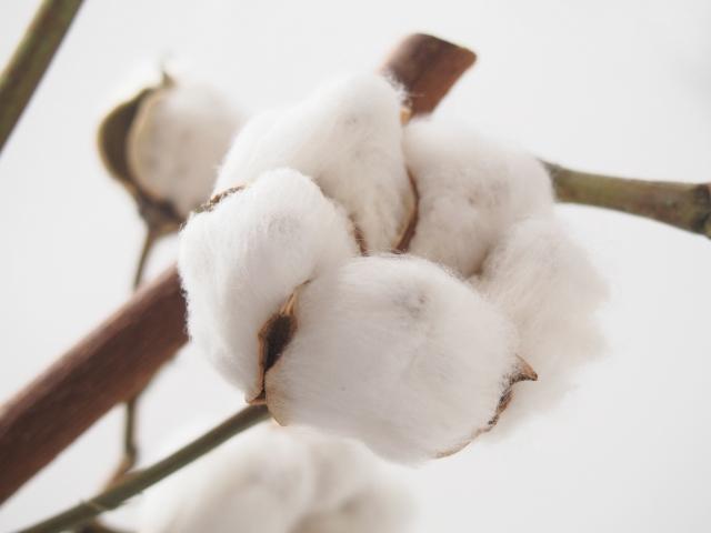 綿100%でやさしい素材